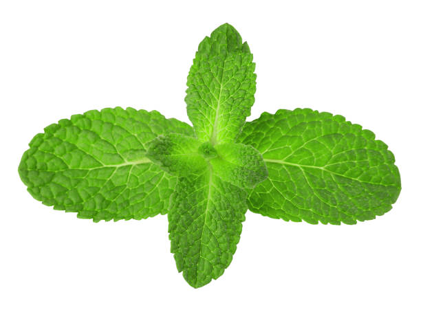 Mint leaves close-up isolated on a white background. stock photo