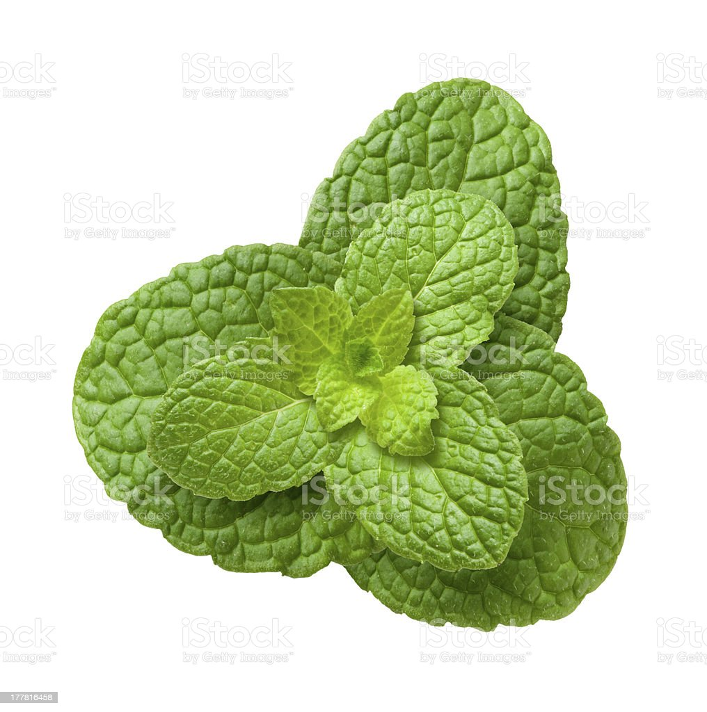 Mint Leaves isolated royalty-free stock photo