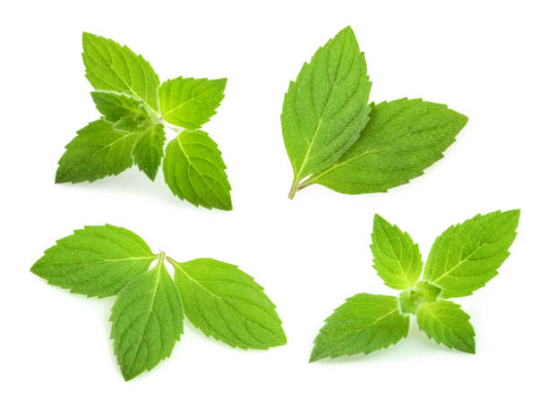 mint leaves isolated. set stock photo