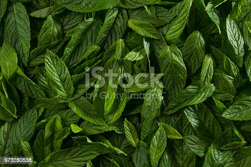 Healthy lifestyle concept with mint leaves