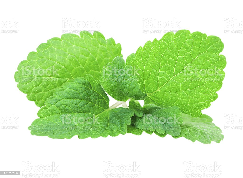 mint, lemon balm royalty-free stock photo