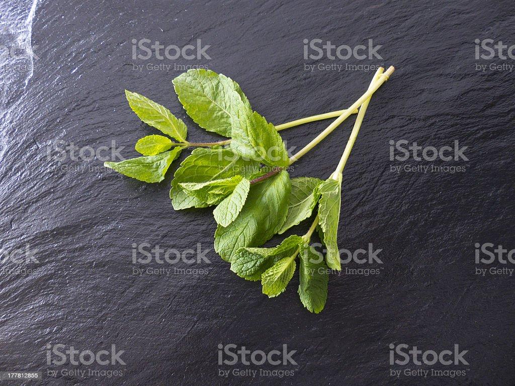 mint on slate royalty-free stock photo