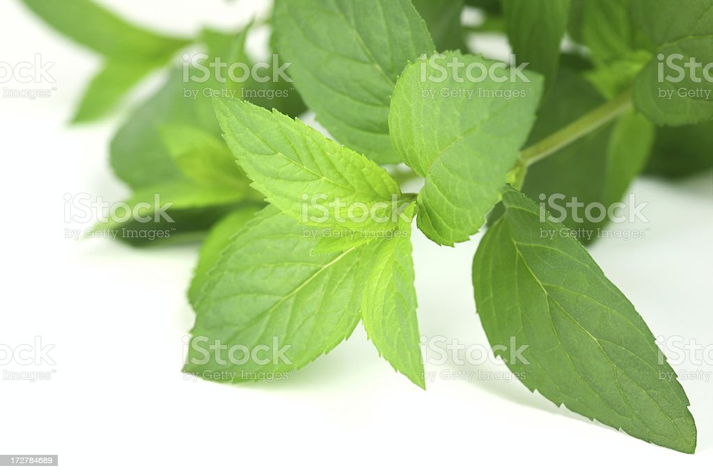 Mint on White royalty-free stock photo