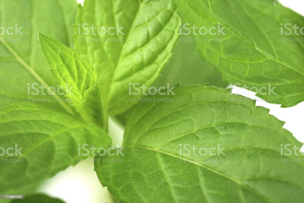 Mint on White royalty-free stock photo
