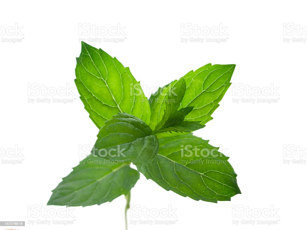 mint royalty-free stock photo