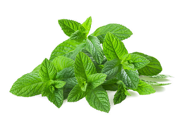 mint plants stock photo