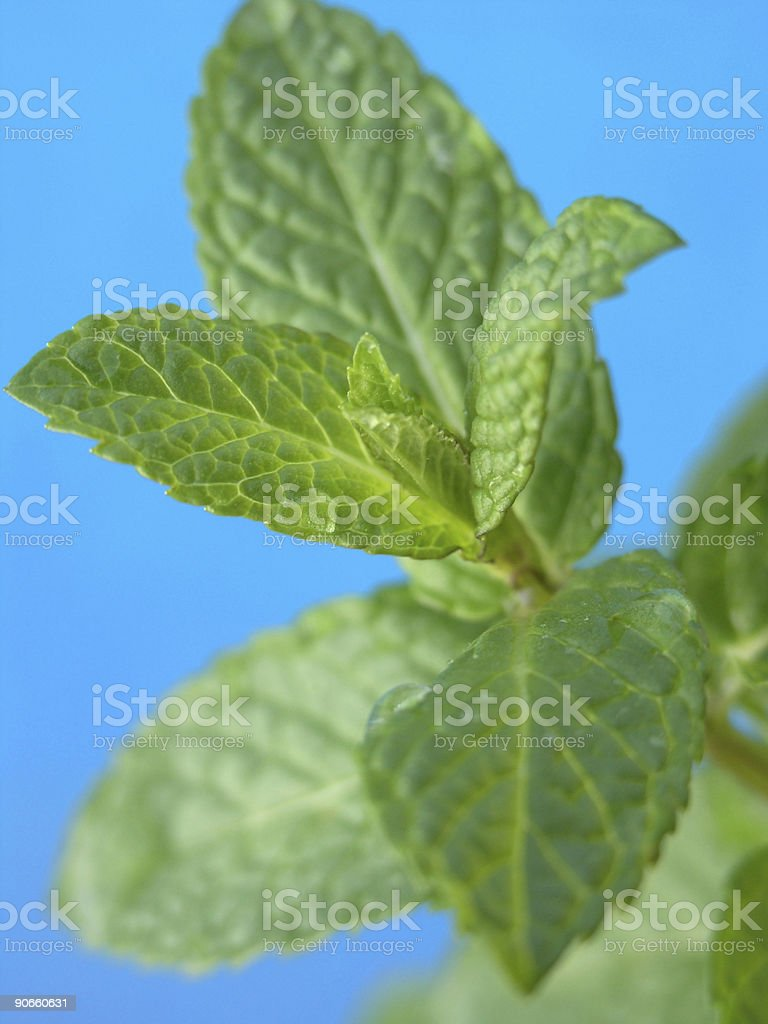 mint & pool: double refreshing! royalty-free stock photo