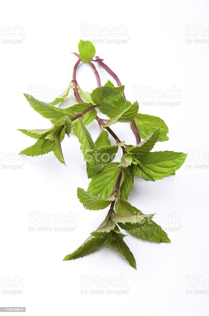 Mint Stem royalty-free stock photo