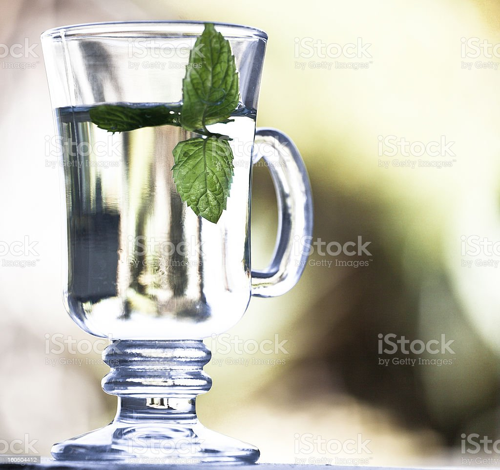 Mint Tea from the garden royalty-free stock photo