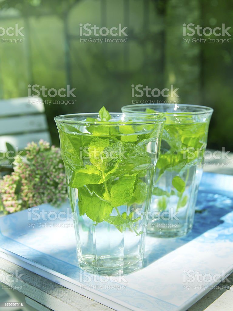 Mint (mentha) tea in the garden royalty-free stock photo