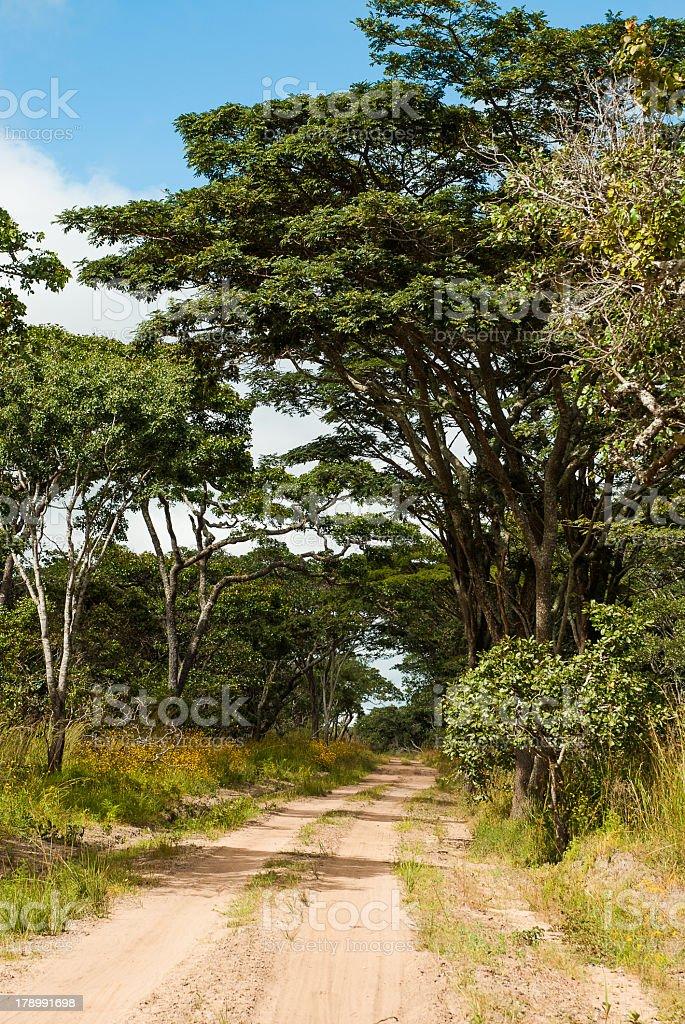 Miombo Woodland Kundelungu Park Congo royalty-free stock photo