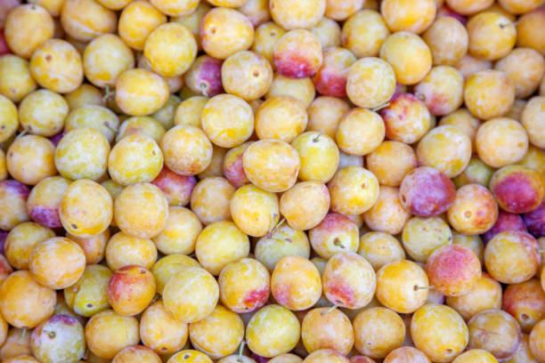 prune mirabelle - mirabelle photos et images de collection