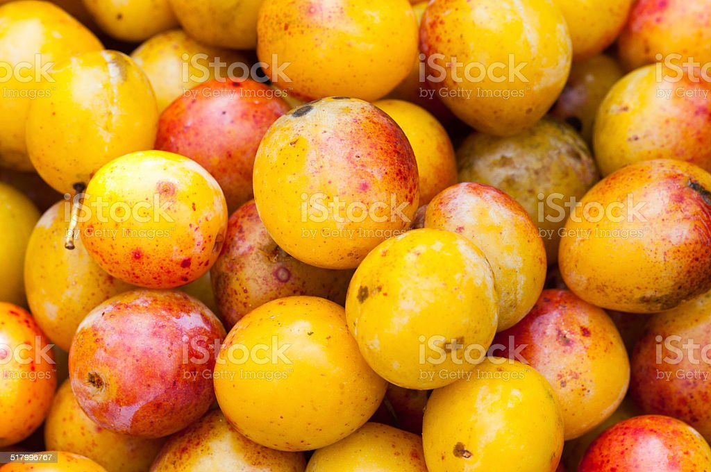 Mirabelles plums stock photo