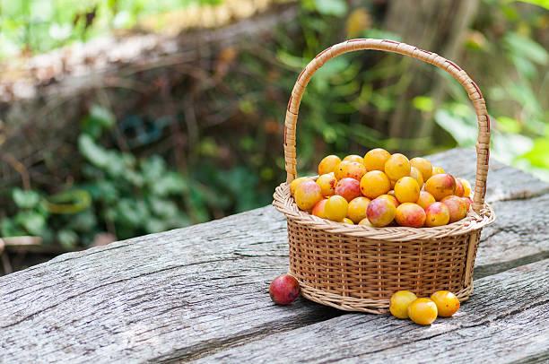 mirabelles prunes - mirabelle photos et images de collection