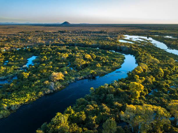 miranda floden fotograferad i corumbá, mato grosso do sul. pantanal biome, brasilien. - biologisk mångfald bildbanksfoton och bilder