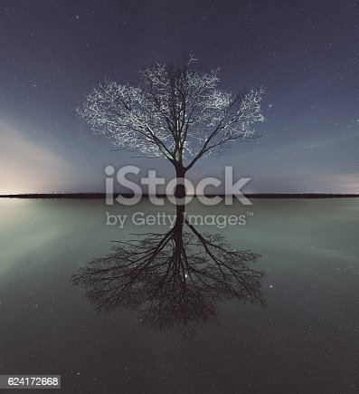 A darker reflection of a tree lies below.  Composite image.