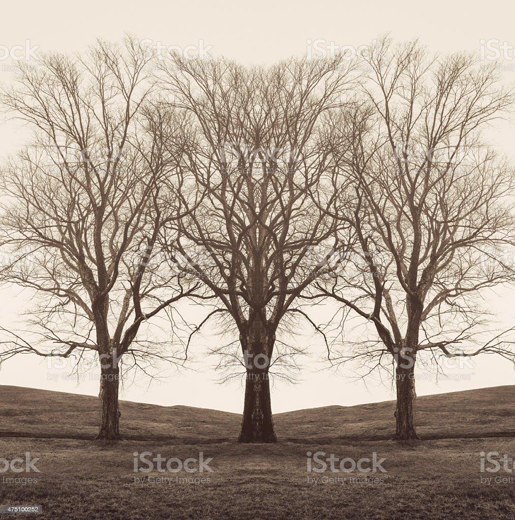 Mirrored Trees stock photo