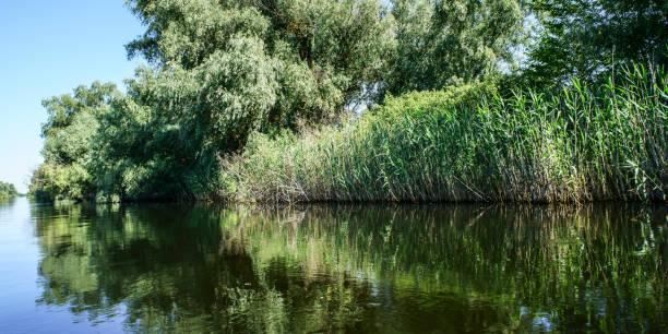 spiegelung in donau delta - havadi-nagy stock-fotos und bilder