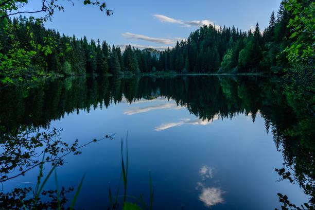 Spiegelung Teich – Foto
