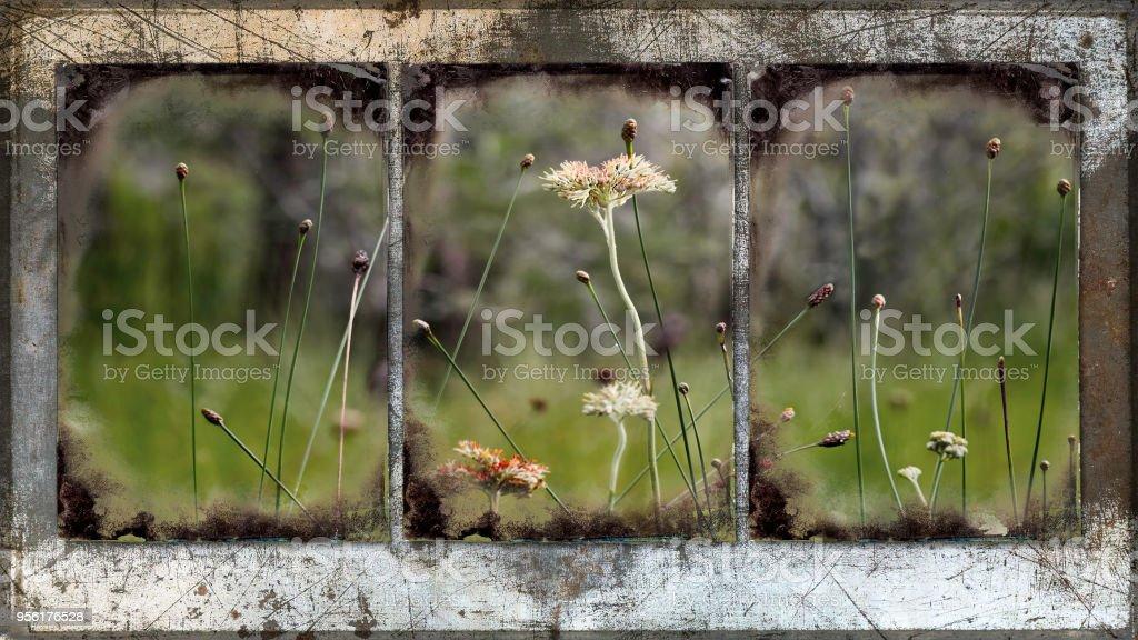 Mirroring the Prairie stock photo