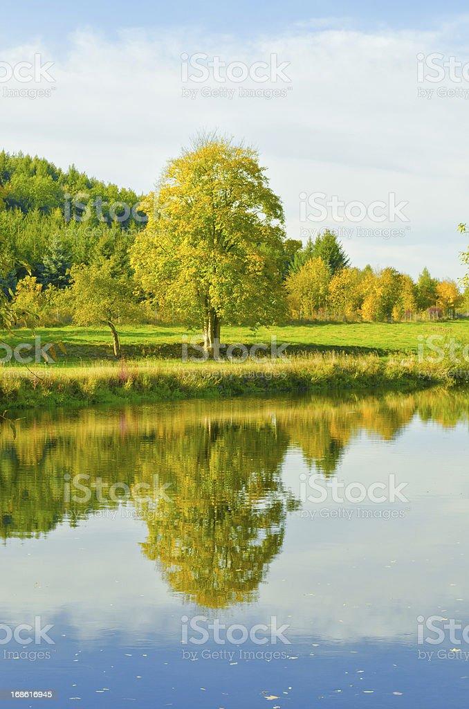 mirroring tree in river stock photo