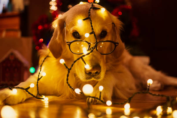 unfug hund in der weihnachtszeit - silvester mit hund stock-fotos und bilder