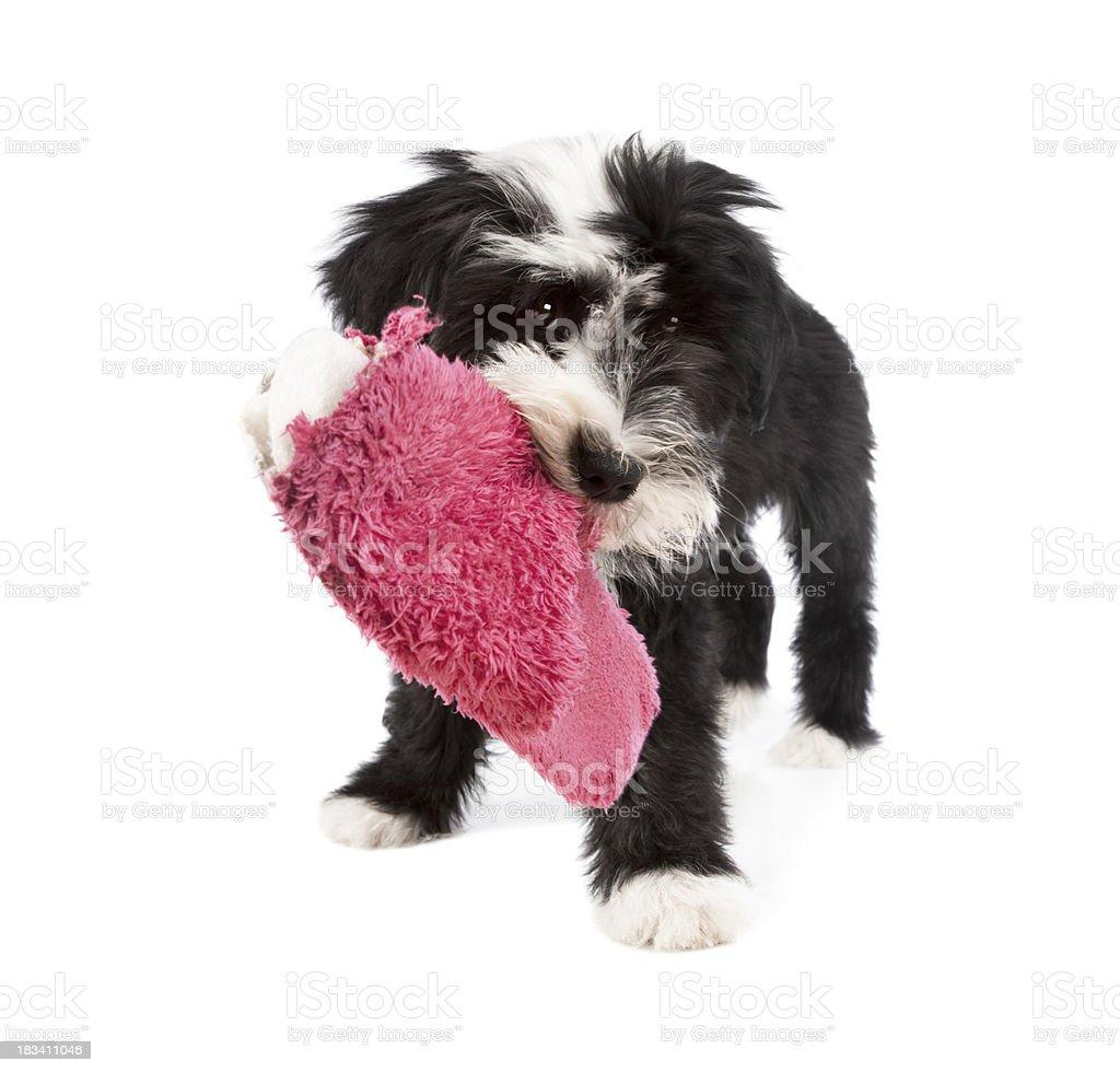 mischief dog royalty-free stock photo