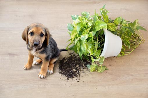 istock Mischievous toy dog 1200157859