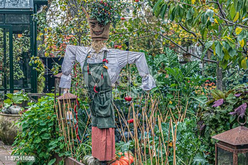 Cute scarecrow ornate with colorful chilis in a fertile organic vegetable garden, with a greenhouse in the background.