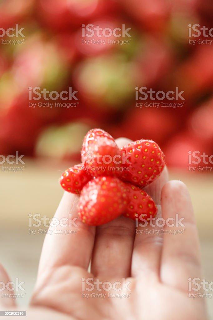 Misshapen strawberry on female palm stock photo