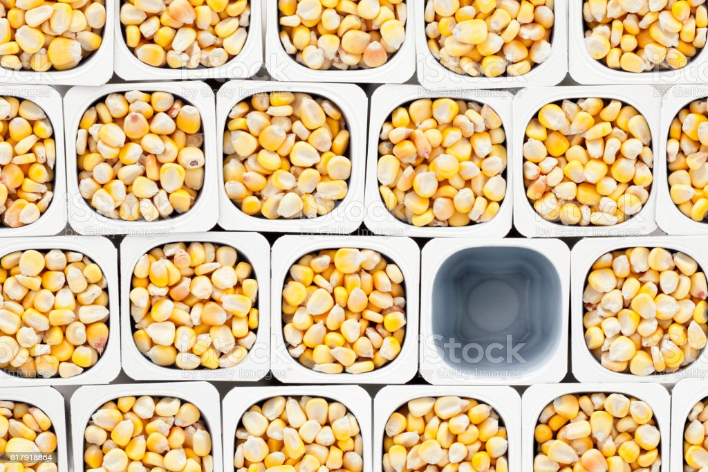 Top view of lots of corn kernels held in plastic containers with one...