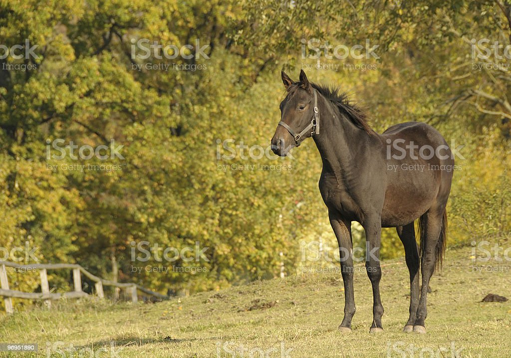 missing horse royalty-free stock photo