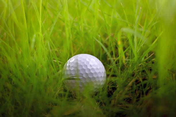 Missing, lost golf ball in green grass rough or hazard out of fairway at golf course, golf, sport, summer concept stock photo