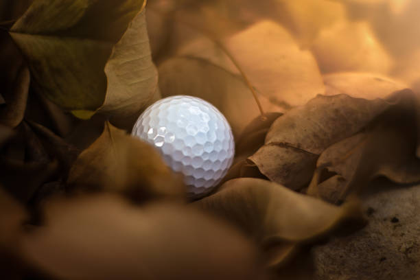 Missing, lost golf ball in rough or hazard out of fairway with beautiful falling leaves at golf course, golf, sport, summer concept stock photo