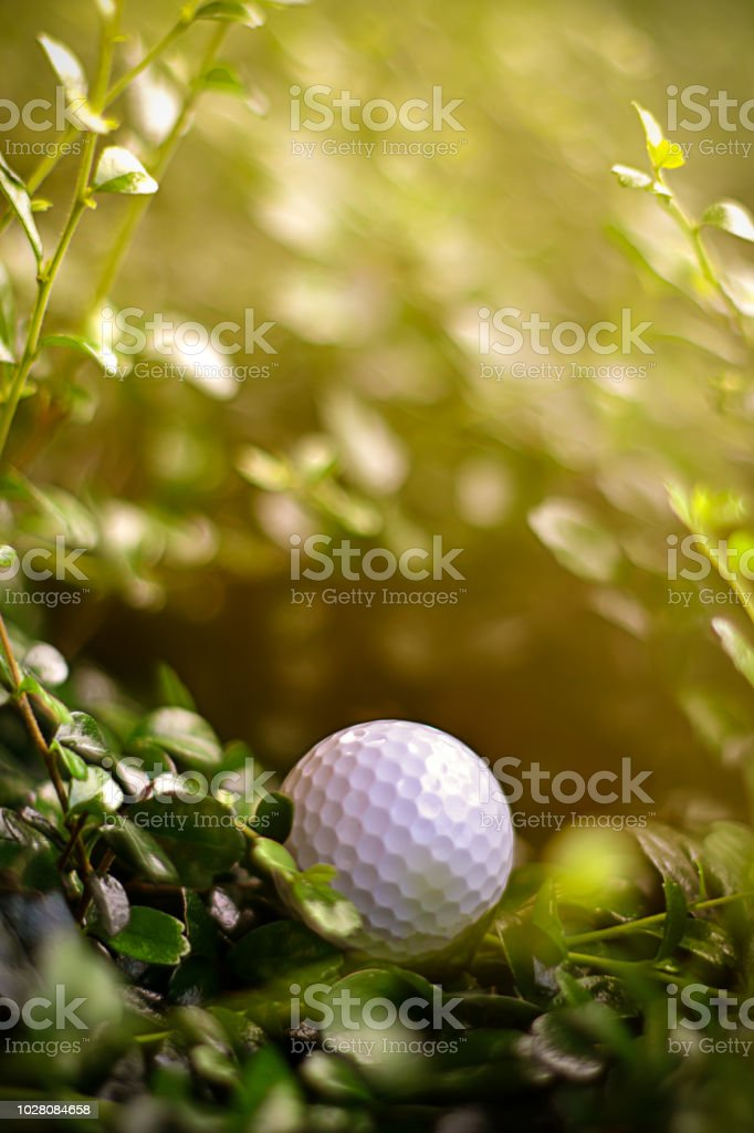 Missing, lost golf ball in rough out of fairway at golf course, golf, sport, summer concept in vertical stock photo
