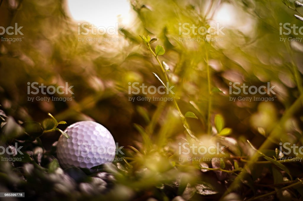 Missing, lost golf ball in rough out of fairway at golf course, golf, sport, summer concept stock photo
