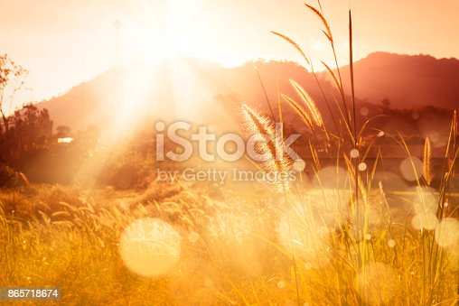 Sunset over mountain with Feather pennisetum or Mission grass backlitght glow against the sunlight  with sunflare and bokeh, high mountain background landscape. Sunset over mountain bokeh.