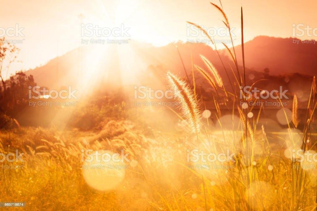 Backlitght hierba misión y bokeh en montaña de la puesta del sol - foto de stock