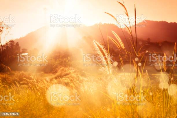 Photo of Mission grass backlitght and bokeh at sunset mountain