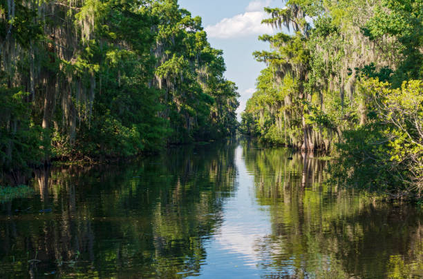 Mississippi River and Forest of Jean Lafitte National Park stock photo