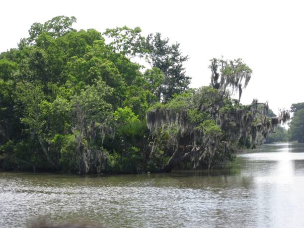 Mississippi swamp and water stock photo