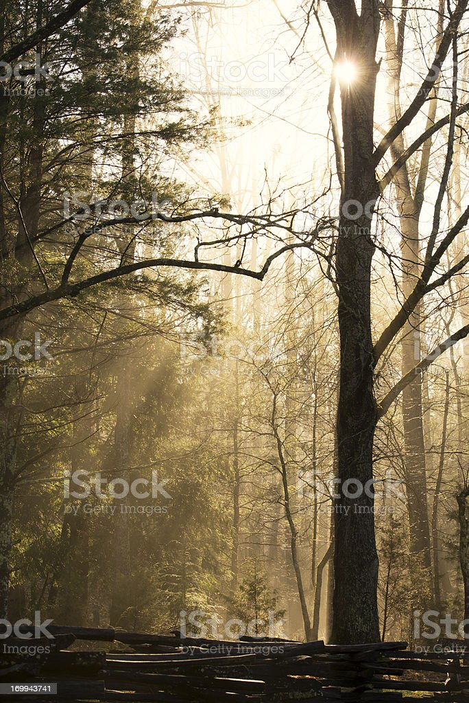 Mist and sunlight in the woods early morning Smoky Mountains royalty-free stock photo