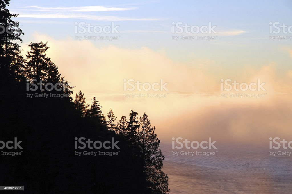 Mist Behind the Trees royalty-free stock photo
