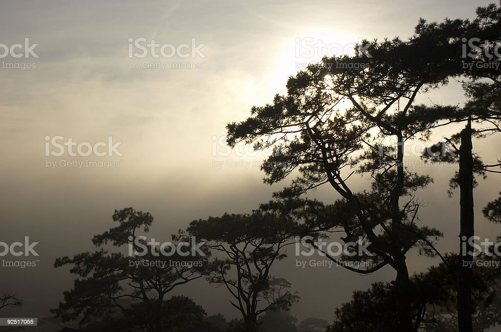 Mist clearing behind trees royalty-free stock photo