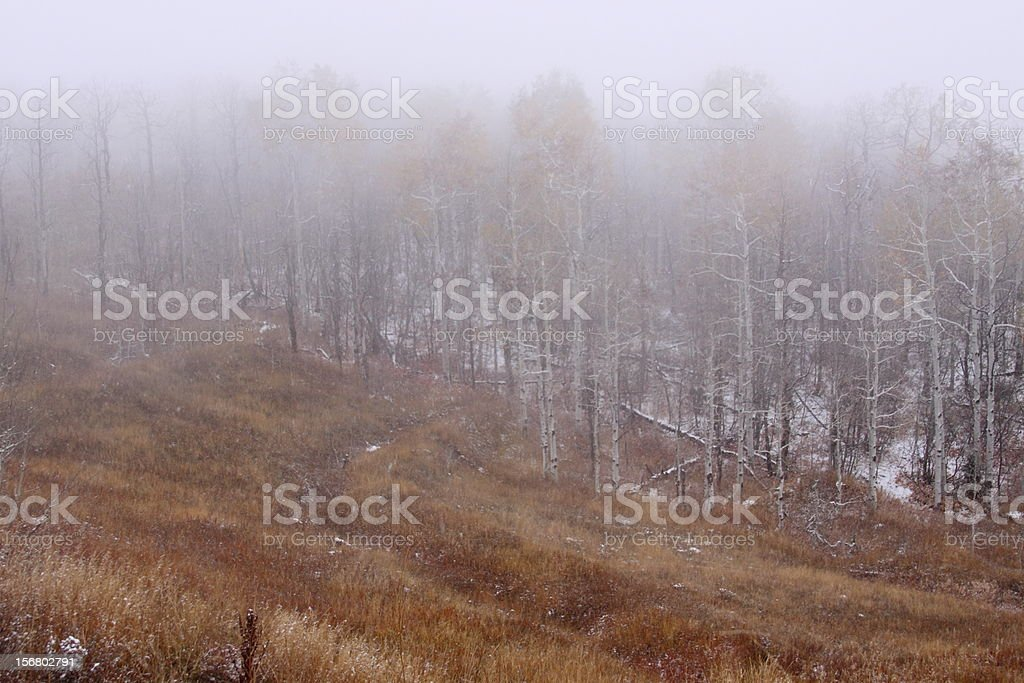 Mist Covering the Woods royalty-free stock photo