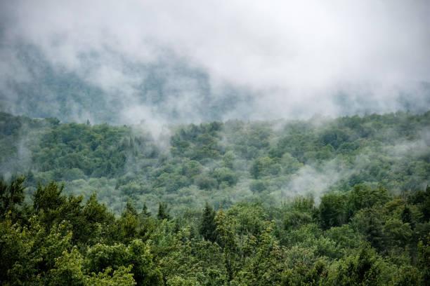Nebel, Wald, Green Mountains, Vermont, USA – Foto