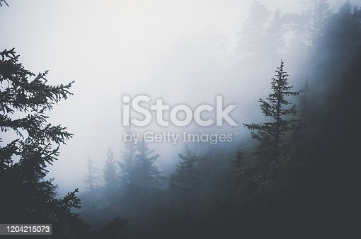 Mystical and spooky view to forest covered with thick mist.