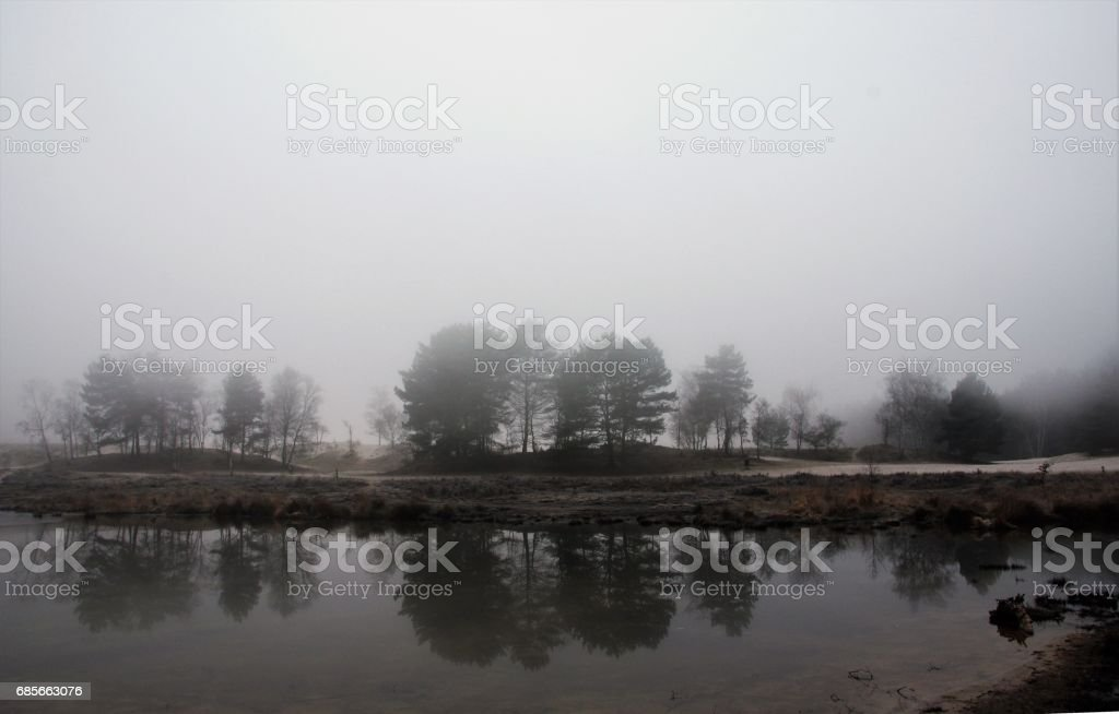 Mist in the wetland royalty-free 스톡 사진