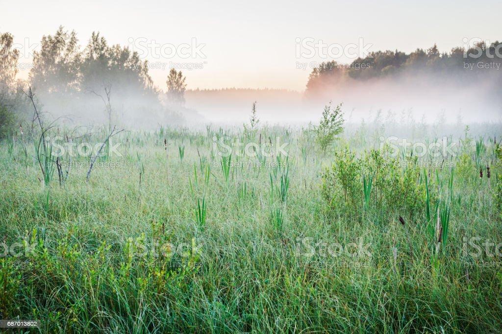 Mist on a bog at dawn Lizenzfreies stock-foto