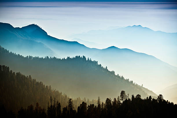 mist on the sierra nevada mountains - trees in mist stock pictures, royalty-free photos & images